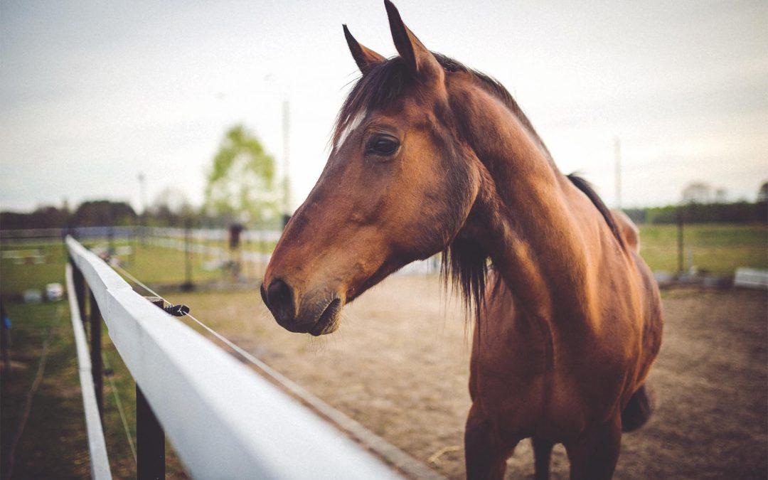 O que saber antes de comprar um cavalo