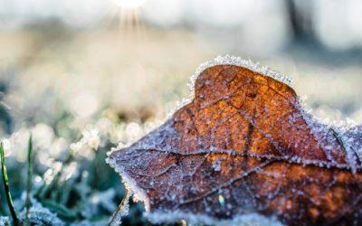 Como proteger a plantação no inverno?