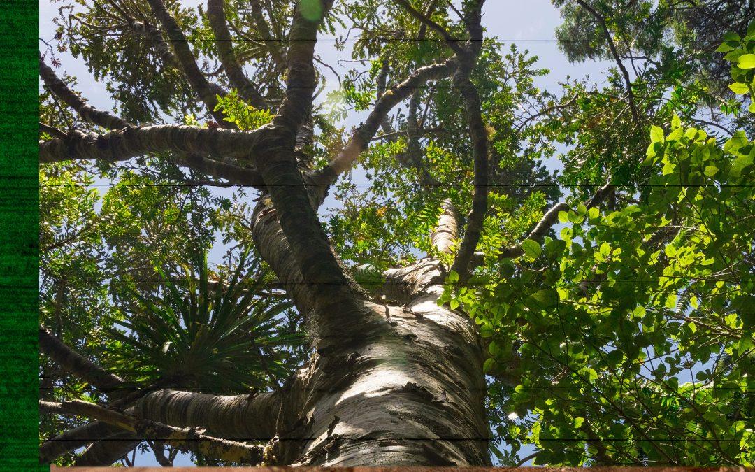 Como prevenir e tratar fungos nas árvores