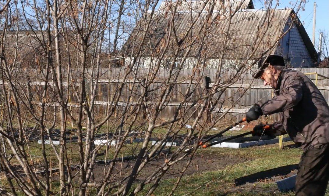 Como podar árvores